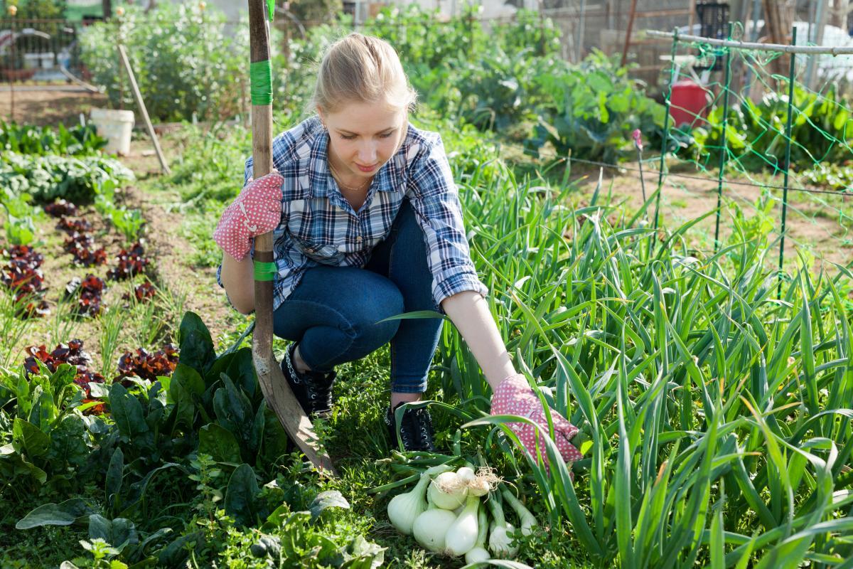 sąsiedztwo warzyw