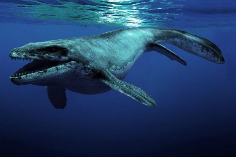 Sea Rex 3D. Podróż do prehistorycznego świata (reż. Pascal Vuong, Ronan Chapalain) - zdjęcie