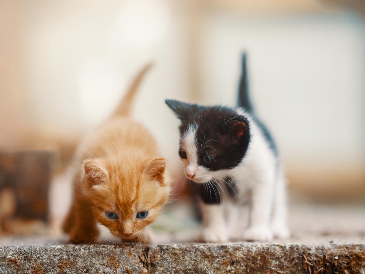 Sennik małe kotki