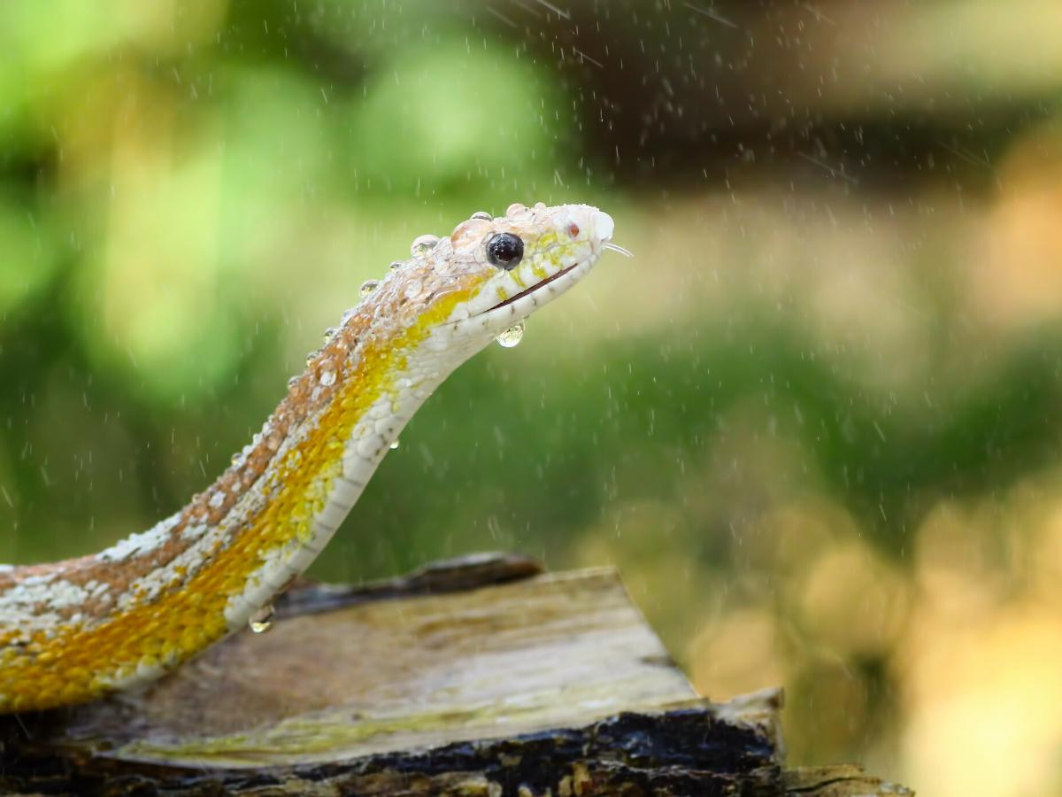 Sennik węże