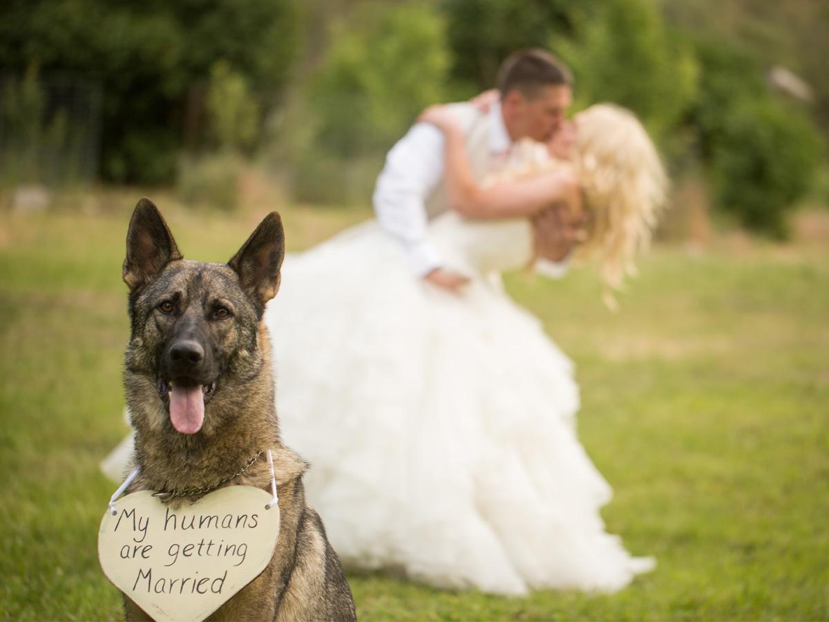 sesja ślubna z psem tabliczka z napisem