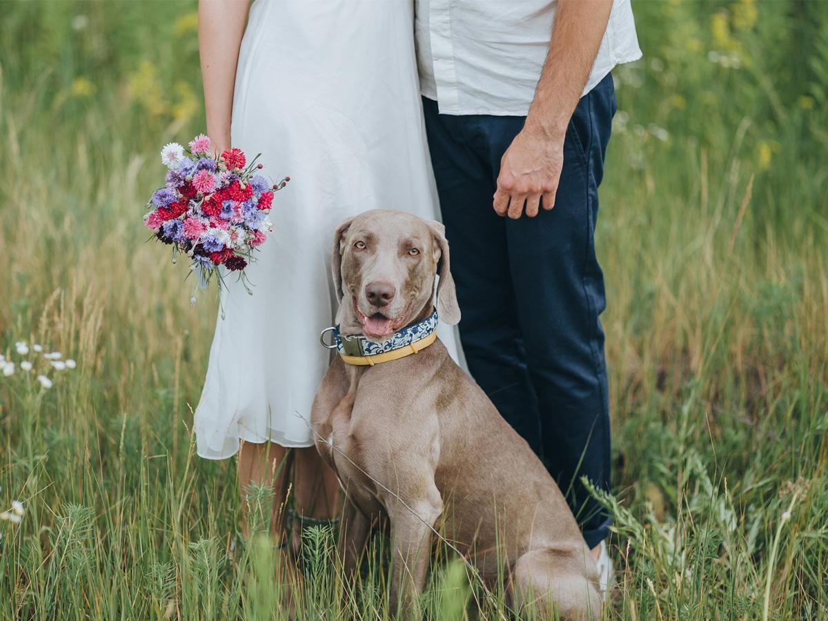 Sesja ślubna z psem w plenerze