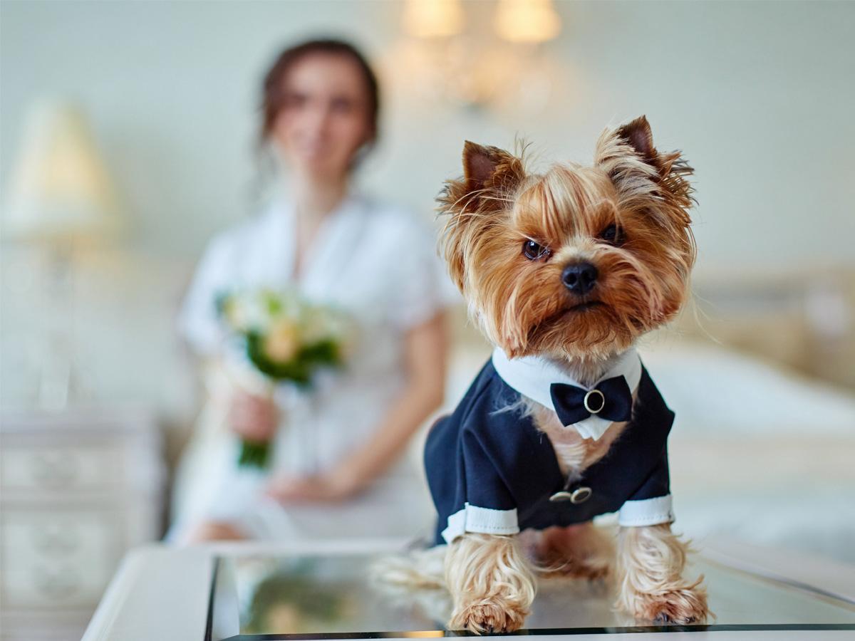 Sesja ślubna z psem w ubranku