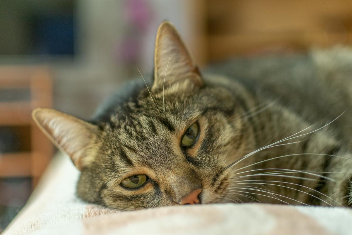 tabletki na odrobaczanie kota