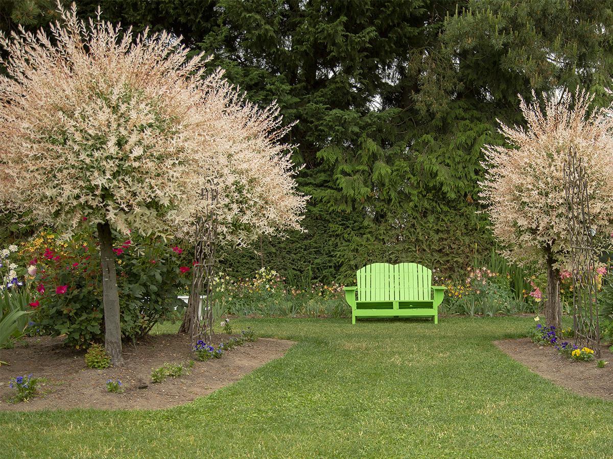 wierzba do małego ogrodu
