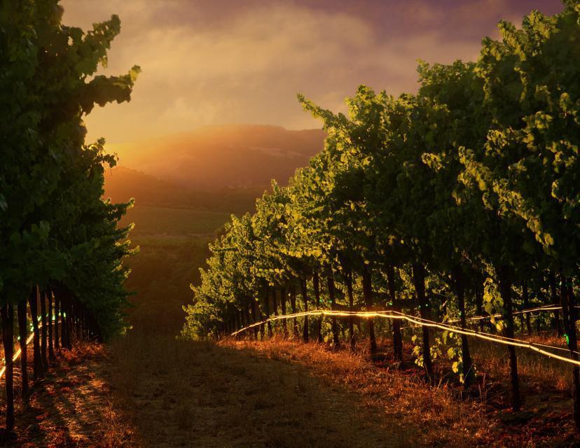 Barrelli_row_of_wines_at_su.jpg