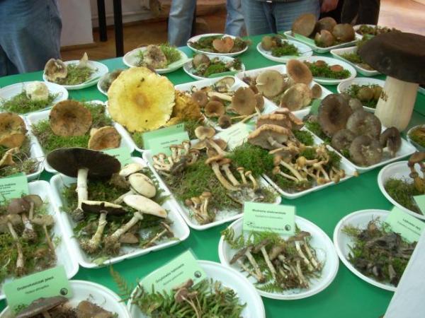wystawa grzybów w Białowieży