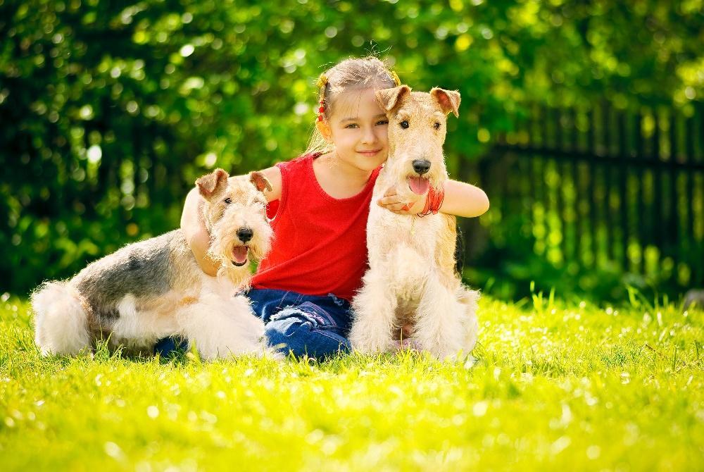 psy, dziecko, fotolia, pies