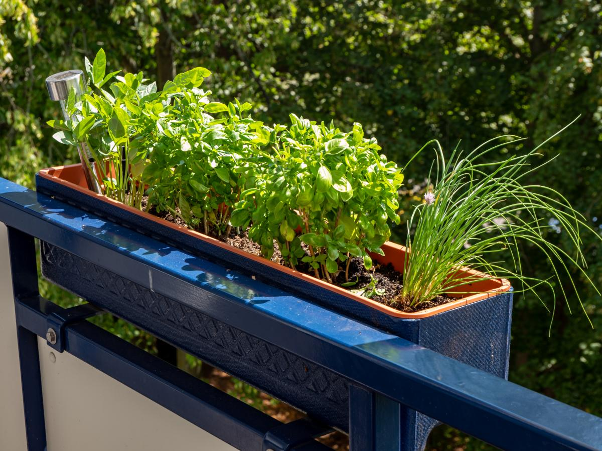 zioła na balkonie w donicy
