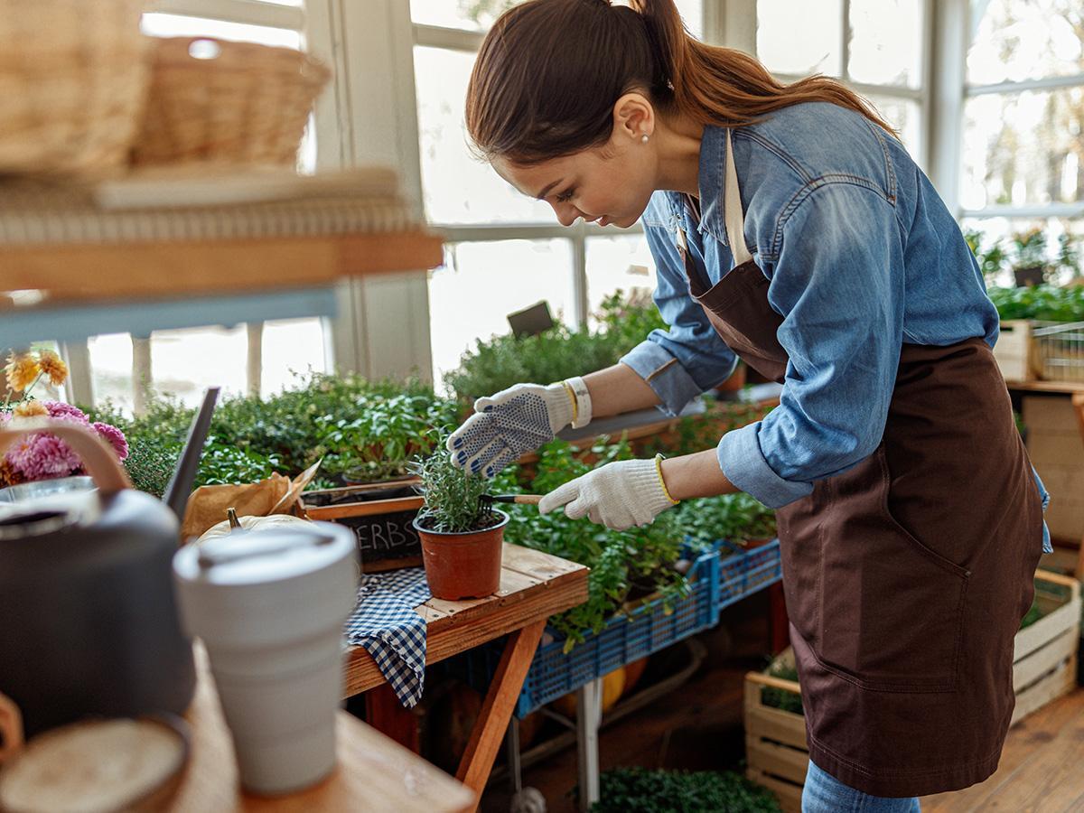 jak sadzić zioła na balkonie