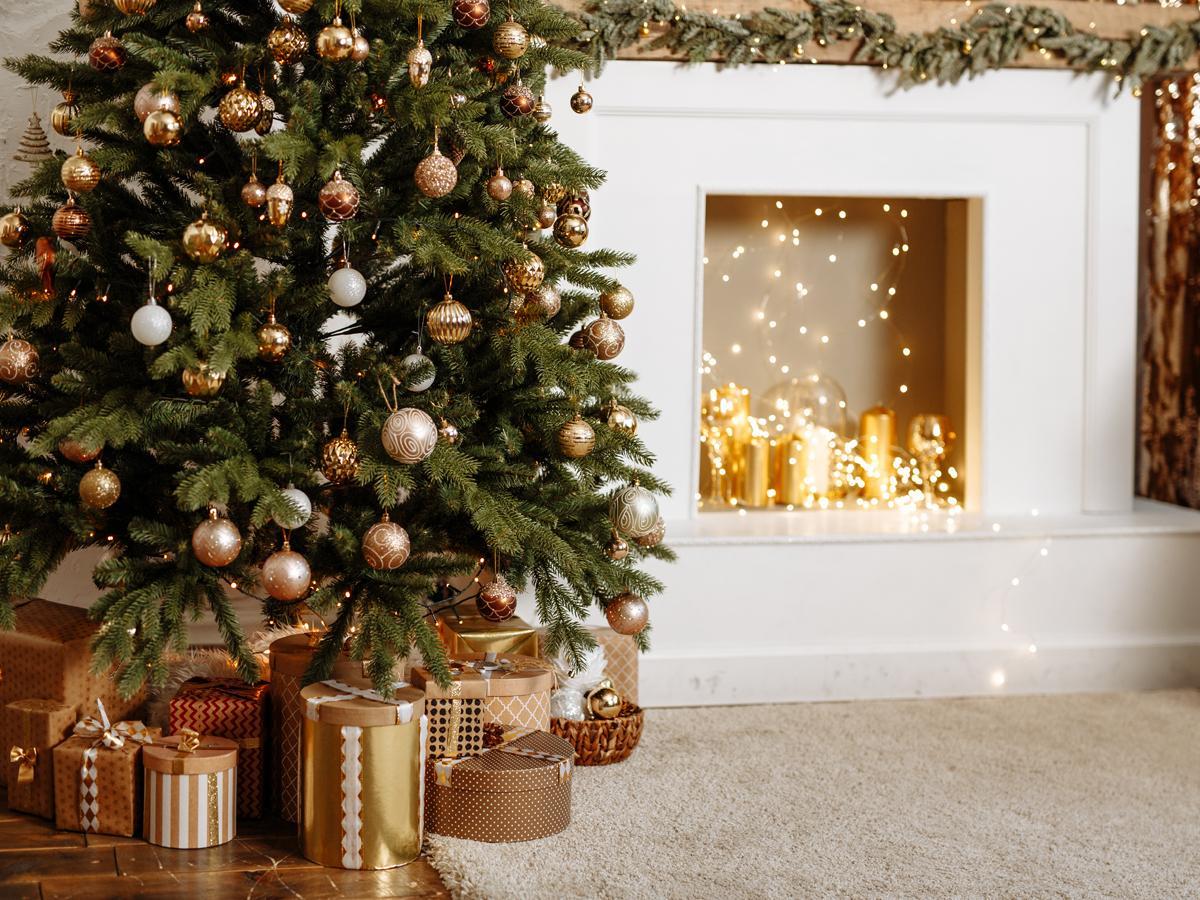 Żywa choinka na Boże Narodzenia