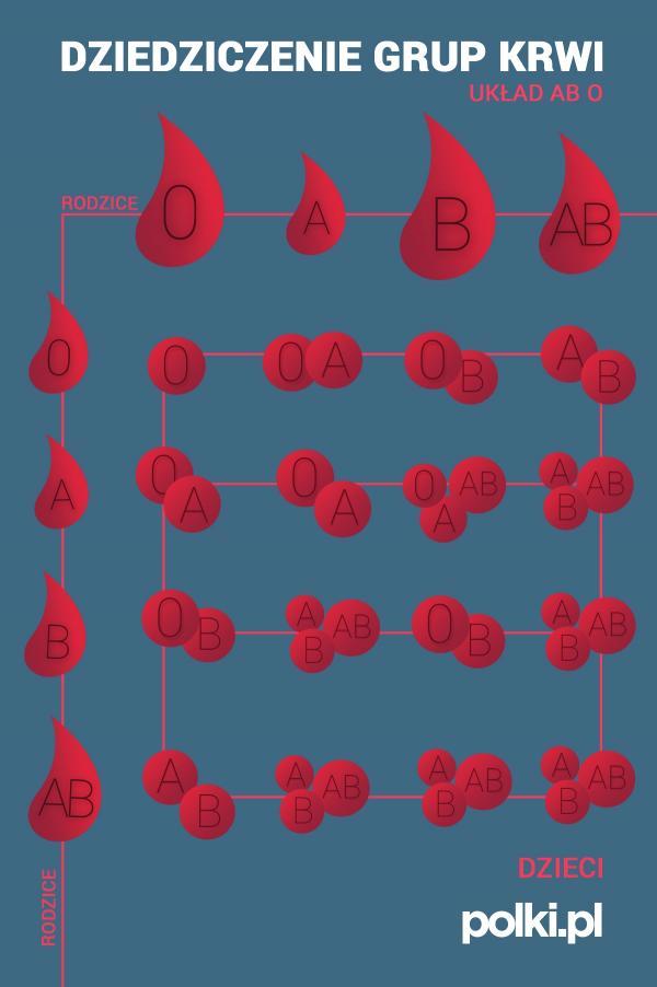 Dziedziczenie grup krwi - grafika