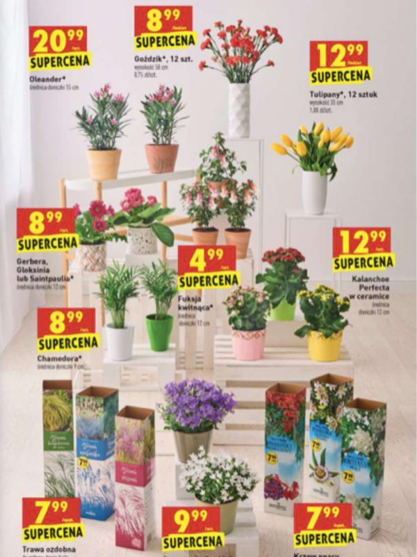 Kwiaciarnia Biedronki - oferta