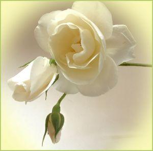Alba Rosa - oprawa muzyczna ślubu