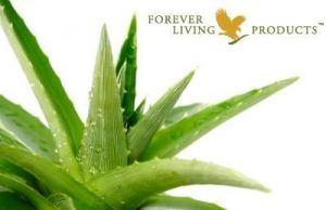 Forever Aloes