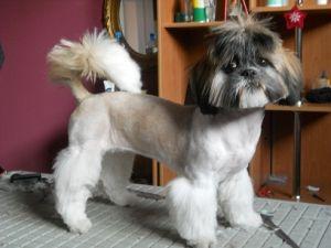 IWO fryzjer dla psów
