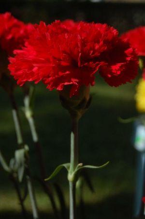 Kwiaciarnia gożdzik- kwiaty na każdą okazję