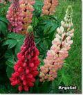 floriankwiatek  ogrodnik multiprofesjojnalista