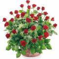 """Kwiaciarnia """" Na Starym Targu """""""