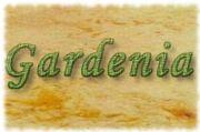 Dekoracje z kwiatów GARDENIA