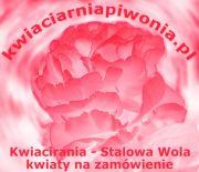 Internetowa Kwiaciarnia Piwonia - Stalowa Wola