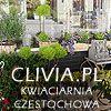 Kwiaciarnia Clivia