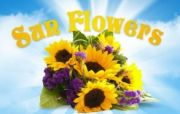 "Kwiaciarnia Internetowa ""SunFlowers"""