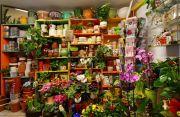 Kwiaciarnia Orchis