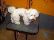 Salon Junior strzyżenie i pielęgnacja psów