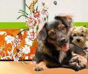 Salon Pielęgnacji Zwierząt Happy Dog