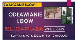 Jak złapać lisa ? Żywołapka, tel. 504-746-203. Klatka, pułapka. Pomoc.lis, zwalczanie, pozbycie, klatki, pułapki, Wrocław, cena, . Odławianie dzikich zwierząt. Odstraszanie.