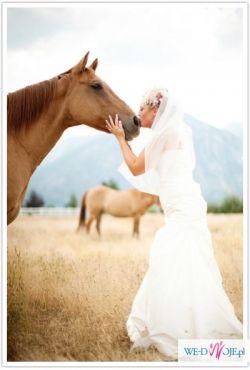 Sesje ślubne z końmi, sesje w plenerze