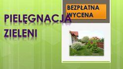 Wrocław, tel. 504-746-203, przycinanie drzew owocowych i krzewów ozdobnych , Cięcie żywopłotu, podcięcie tui, przycinanie krzewów,