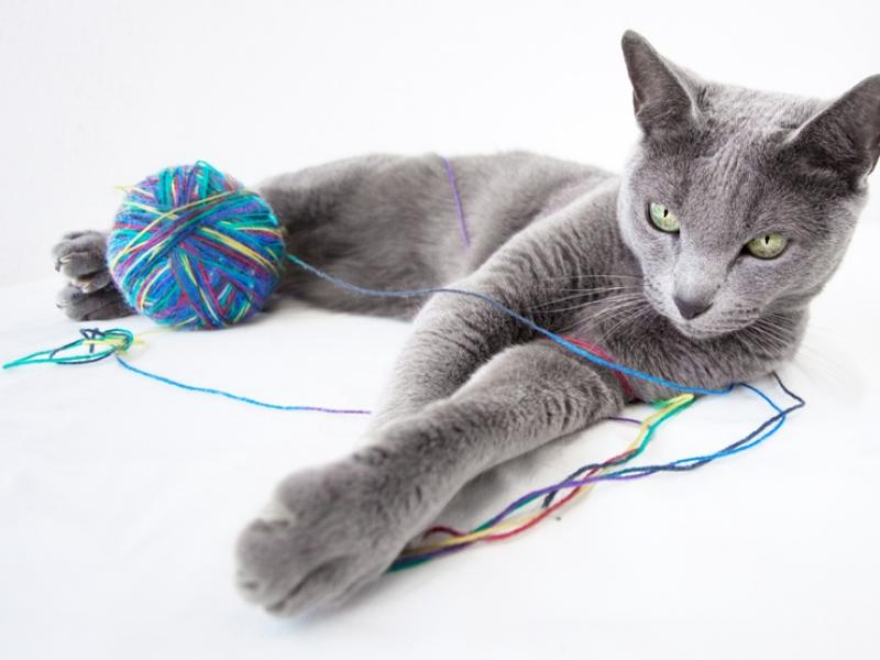 randki ze skomplikowaną osobą kota