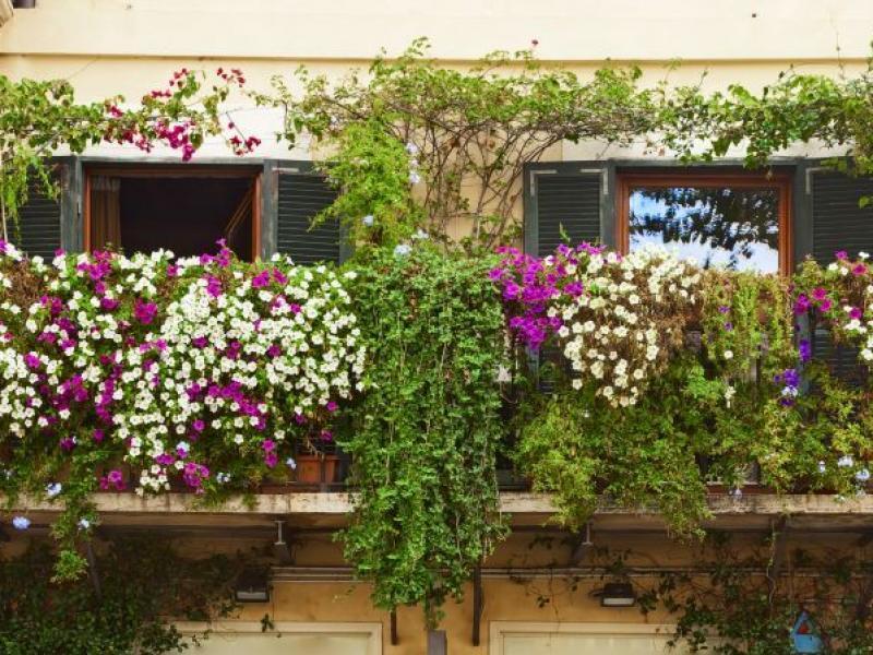 Kwiaty Balkonowe Zwisające 5 Najpopularniejszych Gatunków Ogród