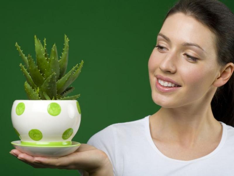 Aloes i alona dla zdrowia i urody
