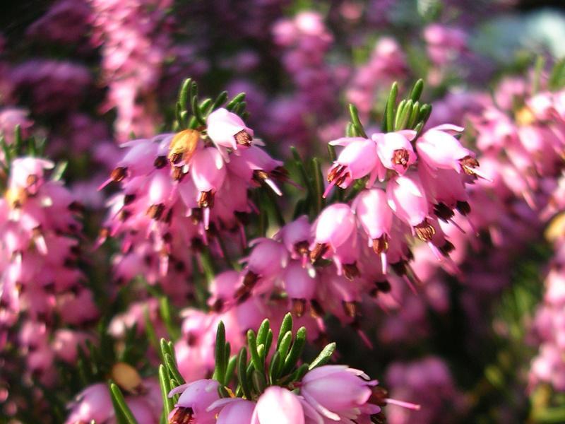Kwiaty/fot. Fotolia
