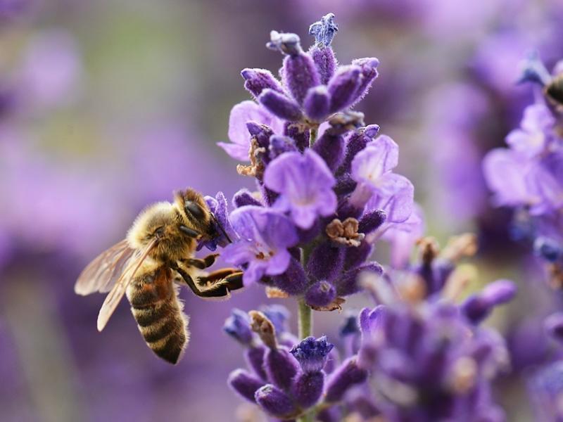 Bez pszczół czeka nas zagłada. Pomóż je ratować!