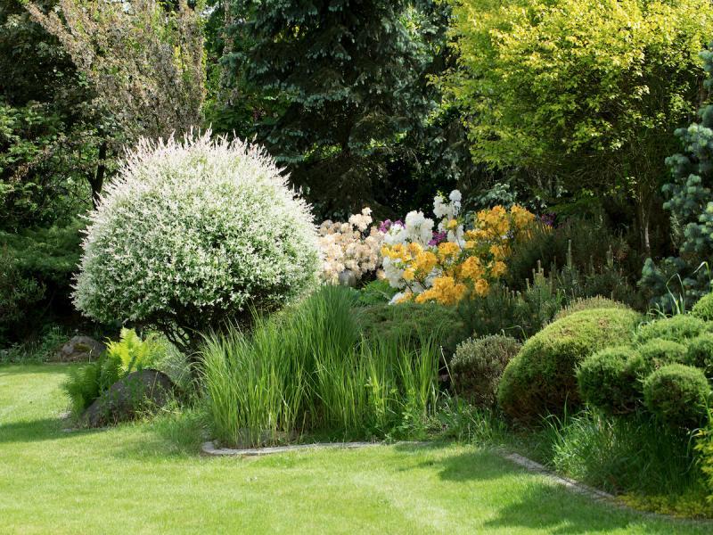 trawy ozdobne obok azalii