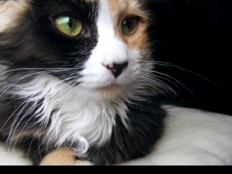 Czy Wiesz Co Zrobić Gdy Kot Drapie Tapety Na ścianach Zwierzęta