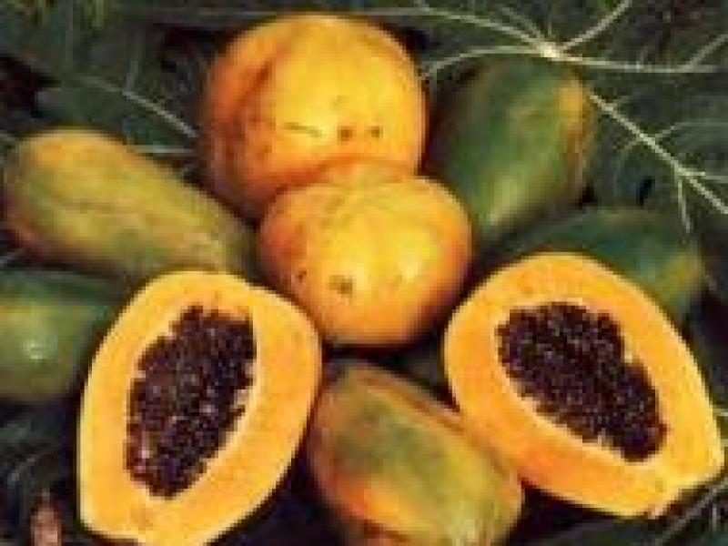 Czy wiesz jak przygotować maseczkę z papai do cery suchej?