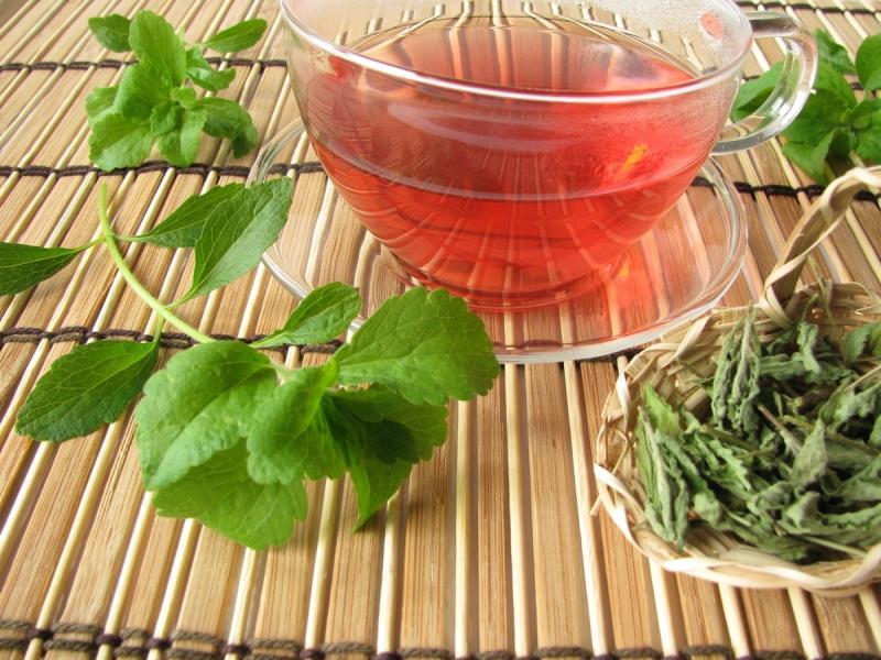 Stewia uprawa - naturalny słodzik w liściach do słodzenia herbaty