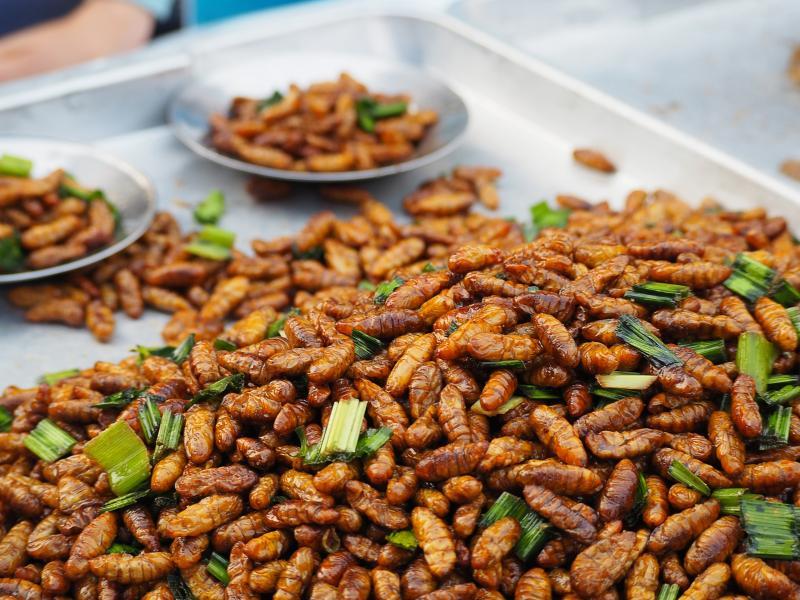 Jadalne owady - ekologiczny zamiennik mięsa, czy kolejna fanaberia?