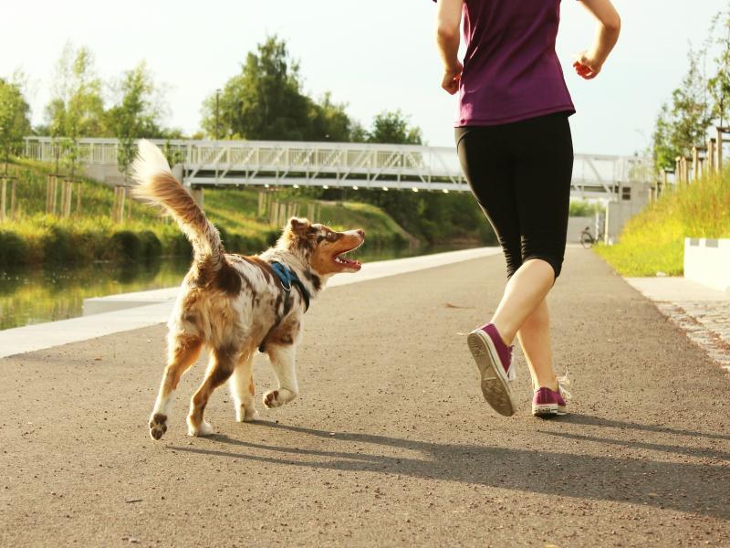 Jak biegać z psem? Tu znajdziesz wszystkie najważniejsze informacje! (+wypowiedzi ekspertów)