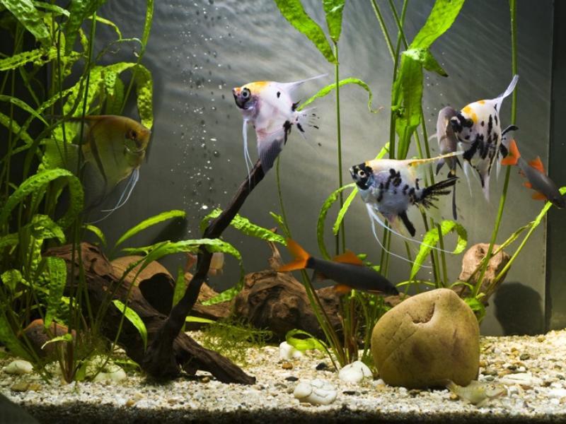 niebieskie ryby randki szybkie randki winnipeg recenzje