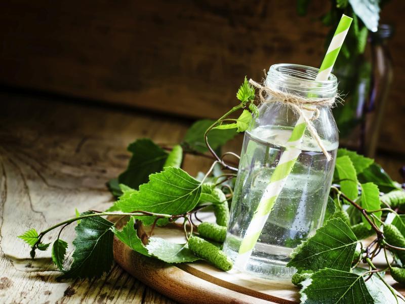 Jakie korzyści przynosi sok brzozowy? Ile można dziennie wypić soku z brzozy?