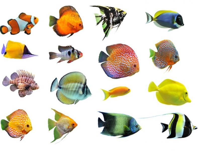 ryby w morzu darmowe randki online