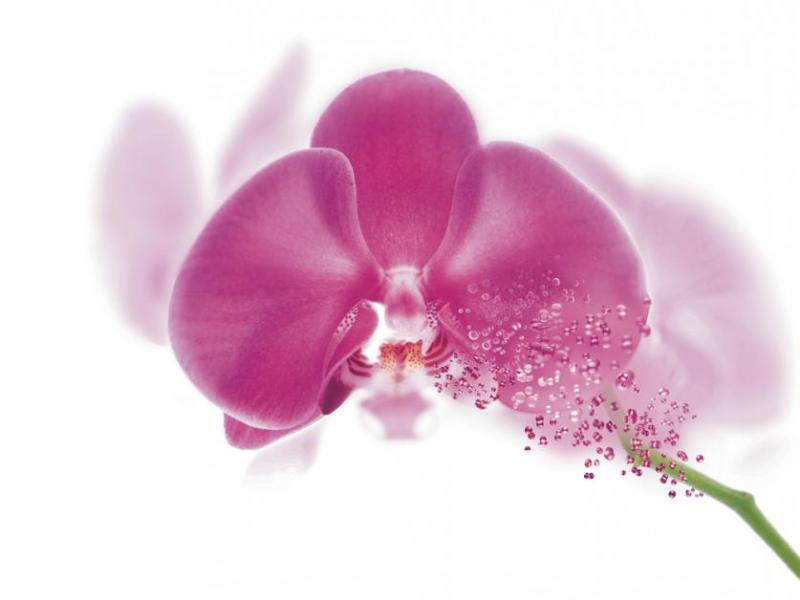 Kosmetyki Garnier ORCHIDEA VITAL