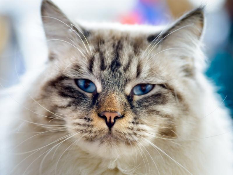 kotka randki online jaka jest dobra nazwa strony randkowej