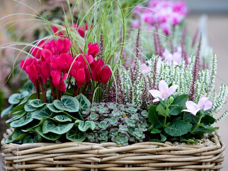 Kwiat Doniczkowy Na Prezent Jaki Wybrac I Jak Wreczyc Ogrod I Balkon Polki Pl
